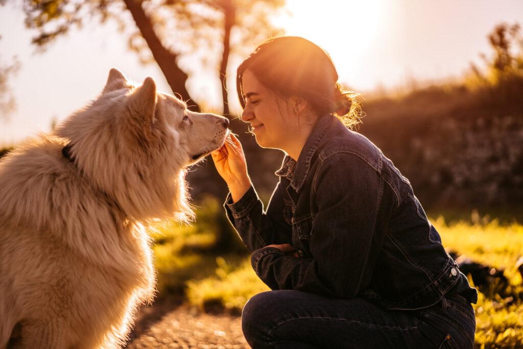 Czym karmić psy z tendencją do otyłości, starsze i sterylizowane?